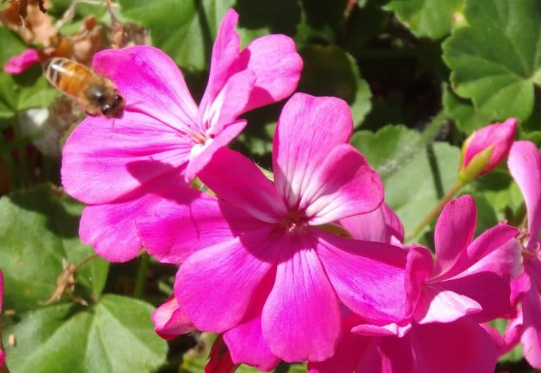 Flower Essences - Flower Essences